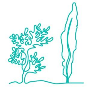 algues-dessin